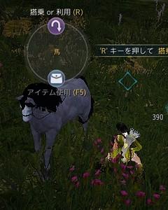 1世代馬~馬体は黒っぽいが鼻筋が白い