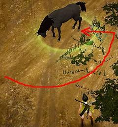 野生馬への接近の仕方