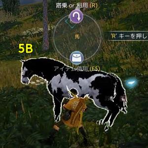 ドリガンの野生馬5B